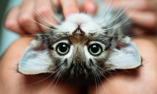 Fakty i mity dotyczące kotów – czy znasz je wszystkie